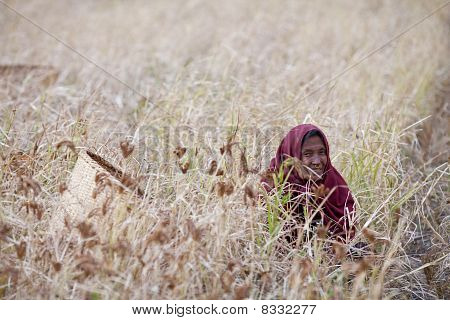 old nepalese woman with basket