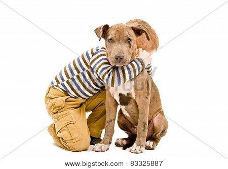 Boy hugging a puppy pit bull