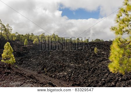 Forest On Lava Field And Clouds