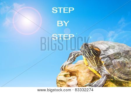 Turtle And Sun Background
