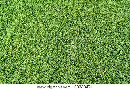Grass Texture Image