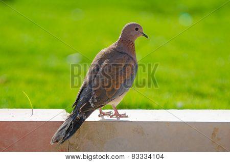 Bird in the oasis