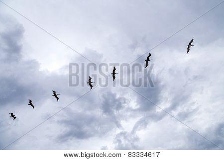Birds Flying In Rain Over The Ocean
