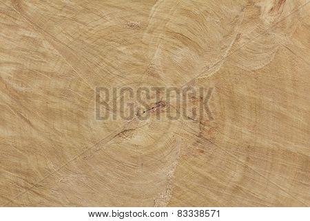 End Cut Of A Big Tree Texture