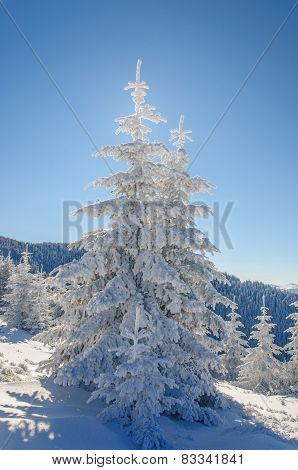 Fir tree and snow on blu sky background