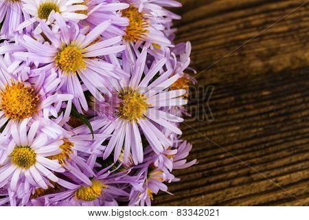 Pale Blue Chrysanthemum