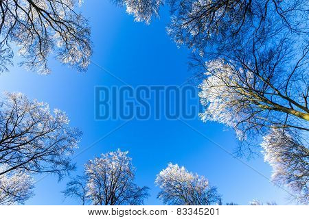Snow Covered Branches Under Blue Sky