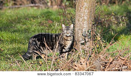 Wild Cat On The Field