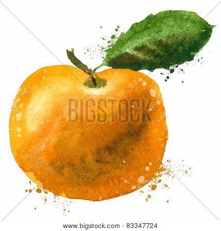 Mandarin vector logo design template. fruit or food icon.