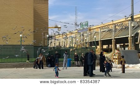 Birds hovering around the shrine of Imam Ali