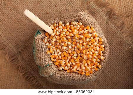 Organic Food: Corn In Jute Sack