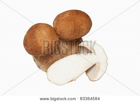 Large Cut Double Cep
