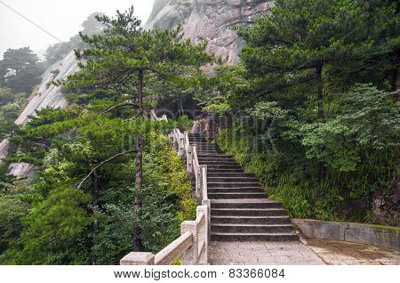 Huangshan mountain stairs path into forest