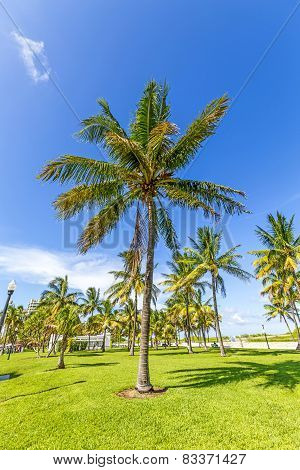 Beautiful Miami Beach With Palm Trees