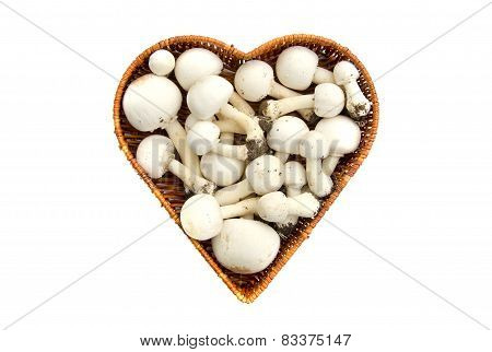 Raw White Wild Mushrooms Champignons Agaricus In Basket Isolated