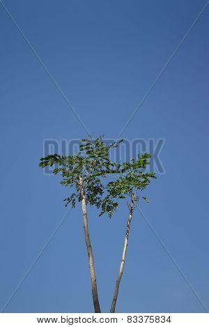 Trees on blue sky