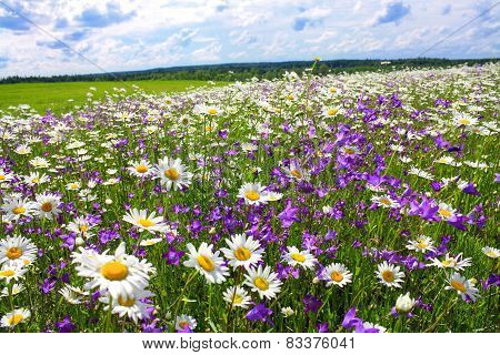 Summer Landscape With The Blossoming Meadow With Flowers