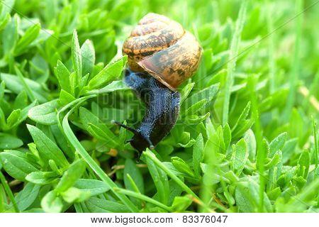 snail on green grass close up