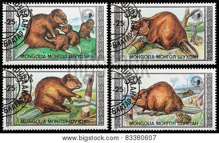 Beaver Family