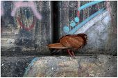 city pigeon poster