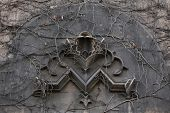 image of century plant  - Old monogram M overgrown with climbing plants at the 19th century building in Berlin - JPG