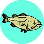 picture of bass fish  - Illustration of a largemouth bass fish viewed from side set inside circle done in cartoon style on isolated background - JPG