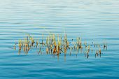 stock photo of marsh grass  - Forest Lake with reflections and blade of grass - JPG