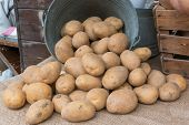 picture of carbohydrate  - a bunch of brown potatoes rolling out of an old iron pail over jute textile