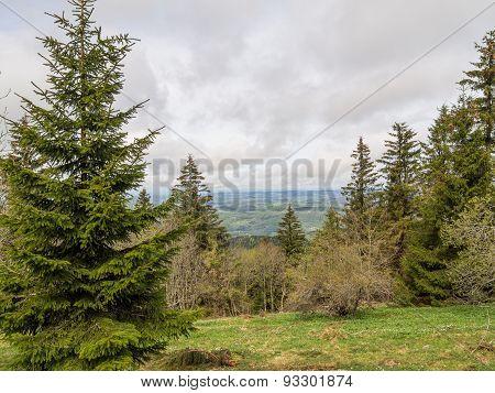 Cloudy View Of Vogezen Past Trees