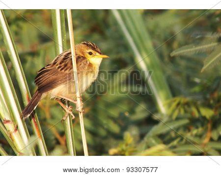 bird rests