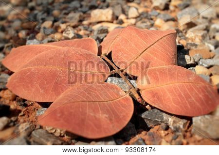 Dried Leaves With The Nature