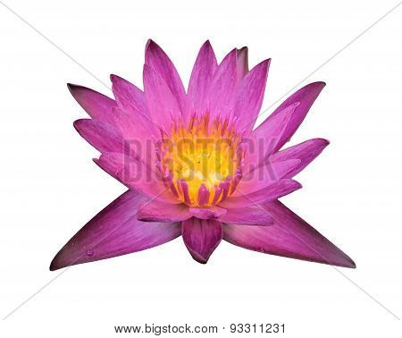 Isolation Of Water Lily