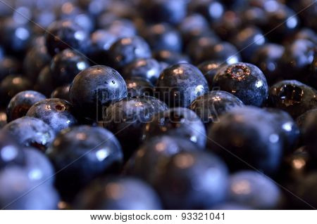 Certified Organic Blueberries, Closeup