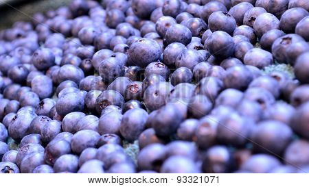 Organic Blueberries In Widescreen Size