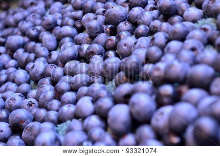 Lots Of Plump Blueberries!