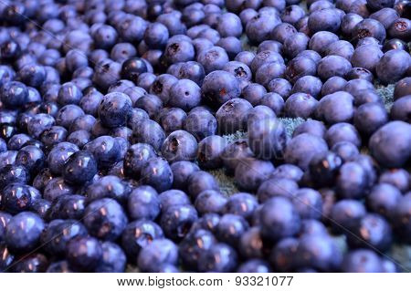 Freshly Picked Organic Blueberry Background