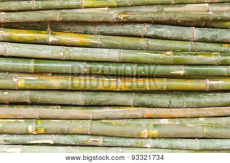 The Background Design With Bamboo.