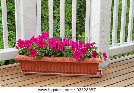 Colorful Flowers In Bloom On Cedar Wood Deck With Trees In Background