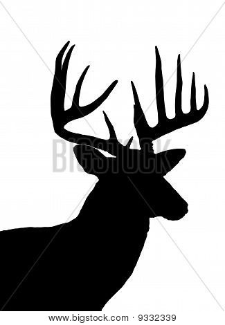 Whitetail Deer Kopf Silhouette, Isolated On White
