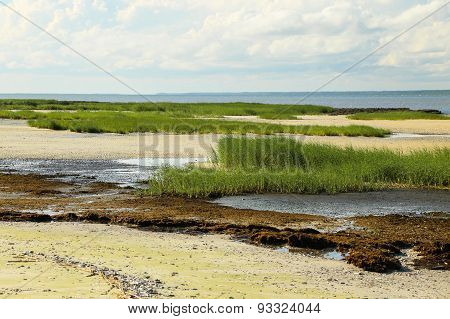 Low Tide Landscape