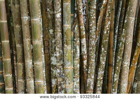 Background design with bamboo.