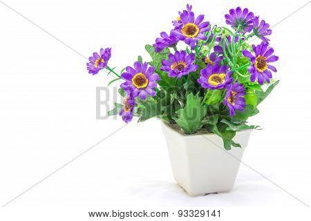 The Flower Color Purple.