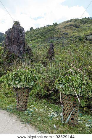 Baskets Filled With Green Leaf Harvest At Roadside