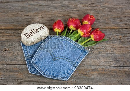 red tulips in blue jean pocket
