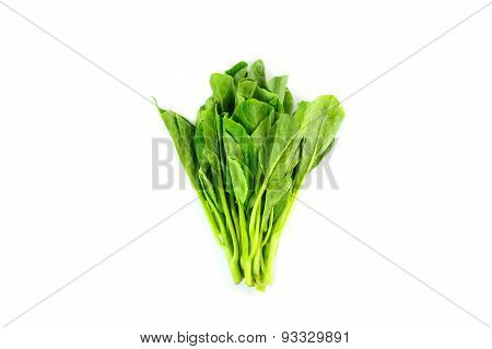Fresh Chinese Kale Vegetables Isolated On White