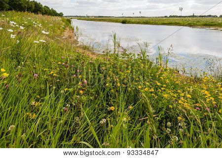 Growing And Blooming Wild Plants