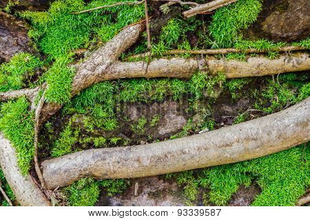 Texture Design With Moss.