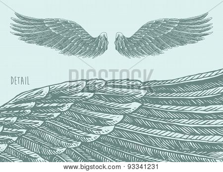 Angel Wings Illustration, Engraved sketch Vector