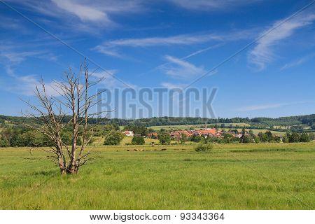 Wetland In The Wetterau