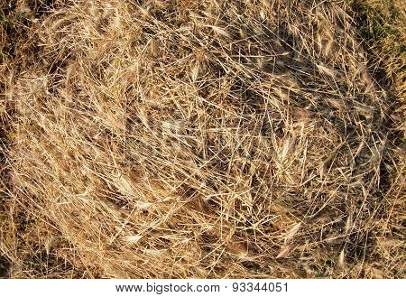 Top View On The Dry Grass Of The Land